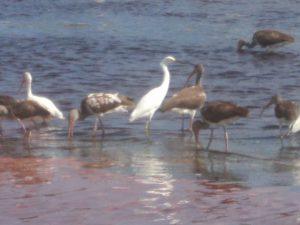 Aves Rio Bermejo Mahahual