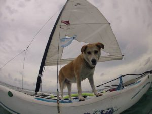 Yaax sailing in front of Pet-Friendly Maya Luna