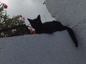 Se admite mascotas. Droppie, el gatito negro en Maya Luna