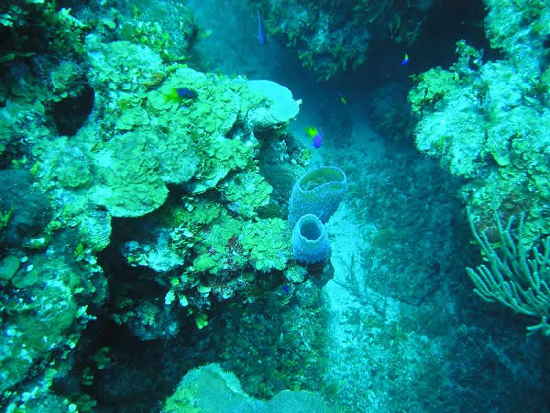 Mahahual Hotel Maya Luna. Diving and snorkeling Costa Maya.