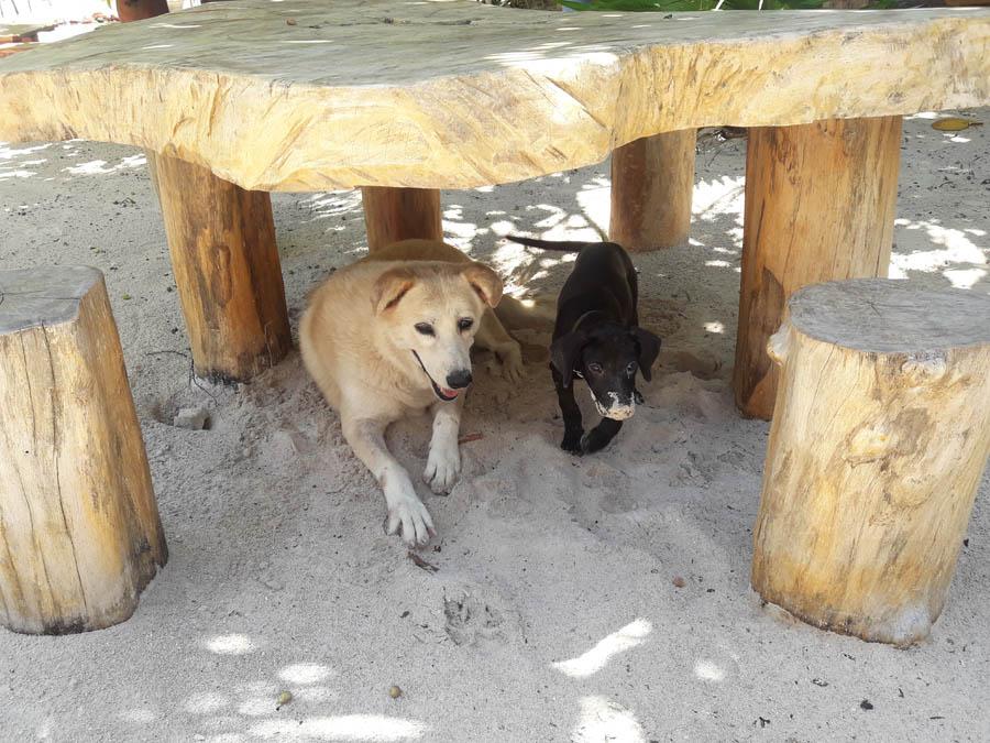 Eco Hotel Restaurant Maya Luna Mahahual. Pet-friendly beach hotel. Pax and Jaax