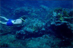Snorkeling at Chinchorro bank