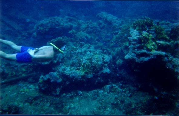 Eco Hotel Restaurant Maya Luna. Dive & Adventure. Snorkeling at Chinchorro bank