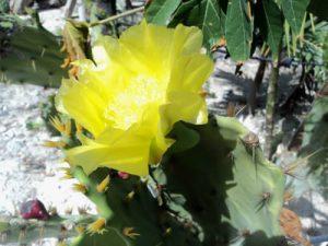Eco Hotel Restaurant Maya Lun Mahahual Mexico   Jardin Cactus