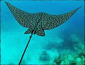 Eco Hotel Restaurant Maya Luna Mahahual- Snorkeling. Manta Ray