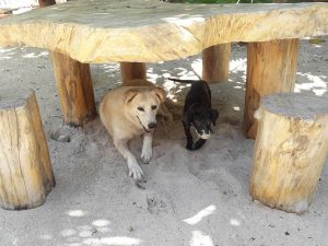 Eco Hotel Restaurant Maya Luna Mahahual. Pet-friendly beach hotel. Pax and Jaax