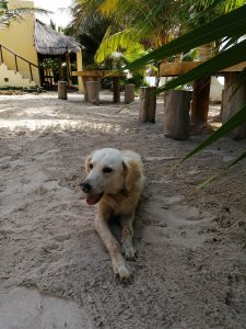 Eco Hotel Restaurant Maya Luna Mahahual Hotel Pet friendly your host Ajax